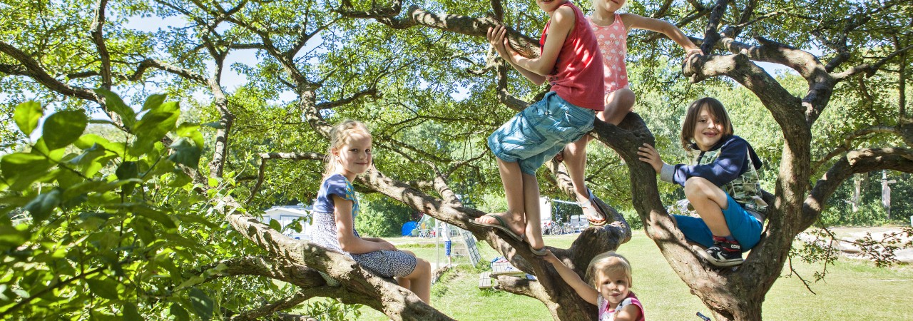 Geversduin tree children climbing